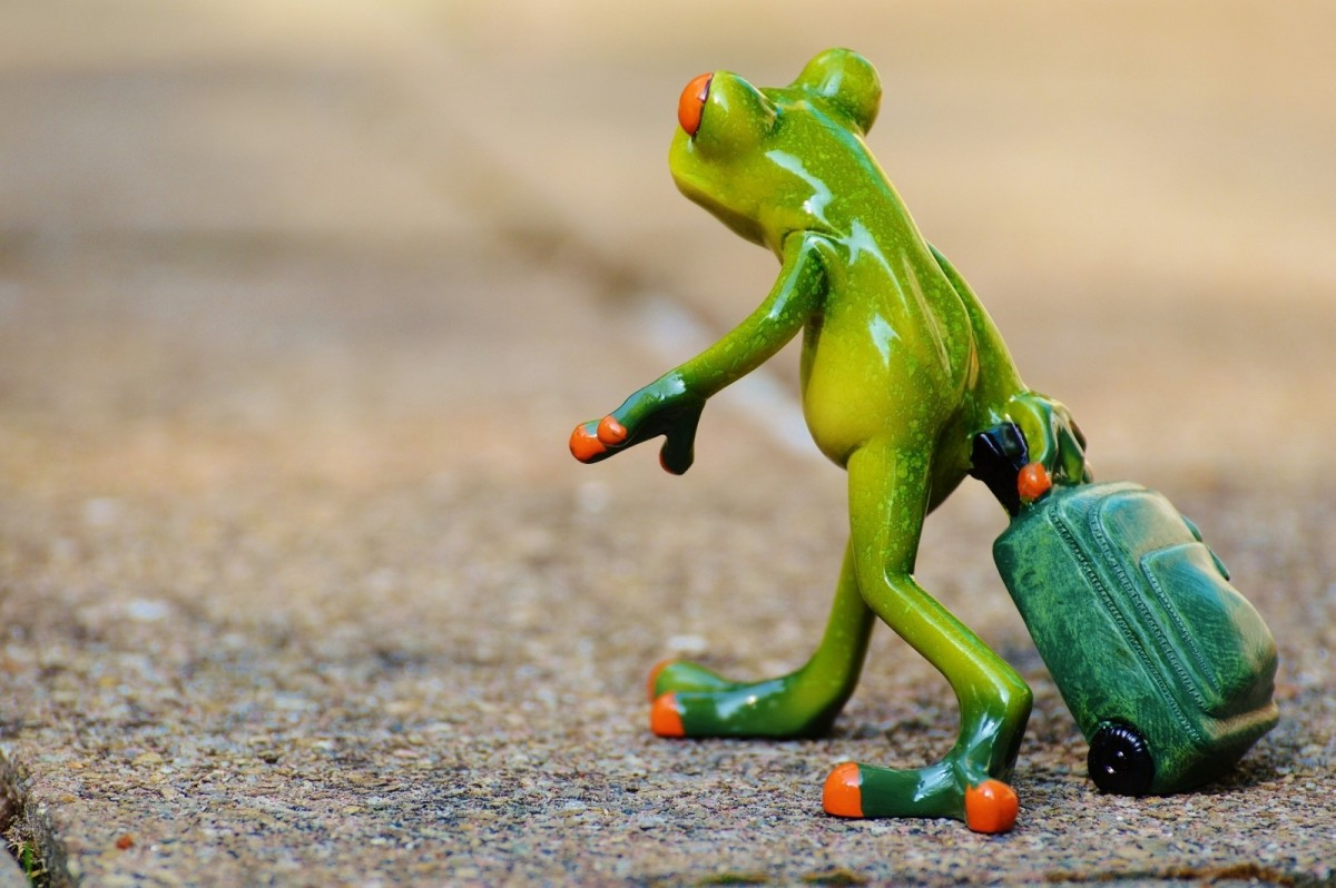frog with suitcase