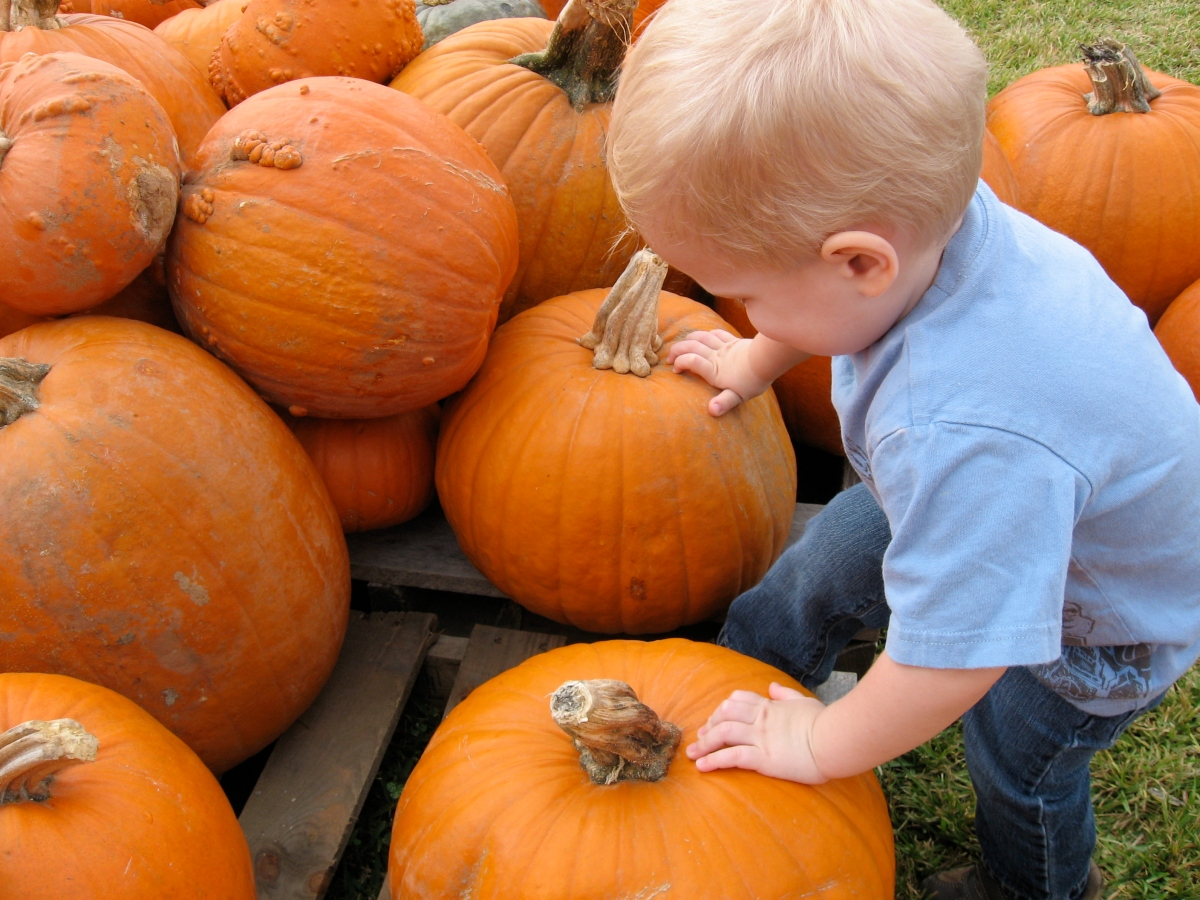 kid pumpkin patch