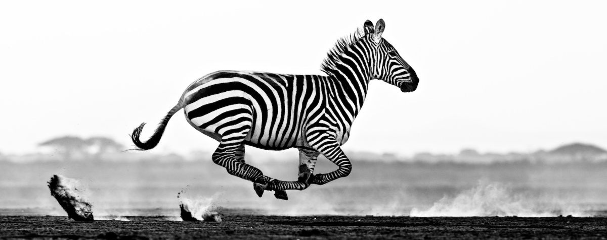 desert flight david yarrow
