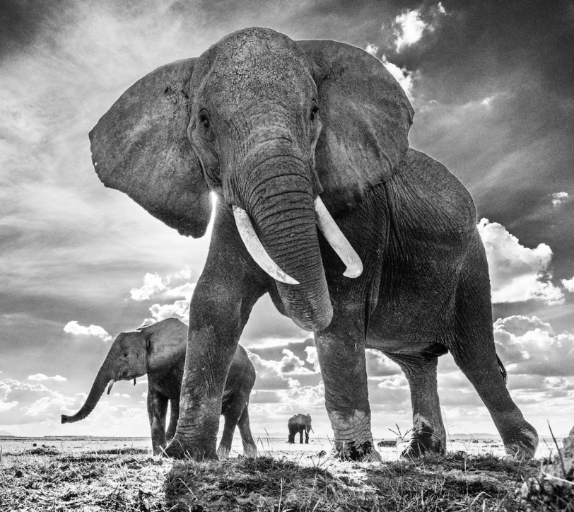the untouchables david yarrow